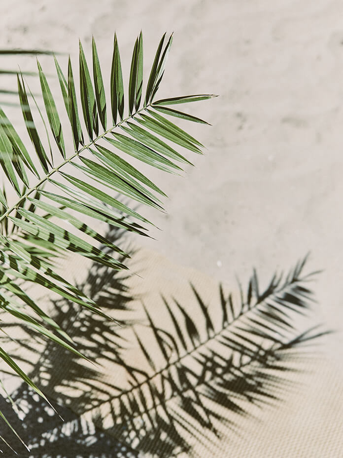 gitane-la-plage-marbella-palm